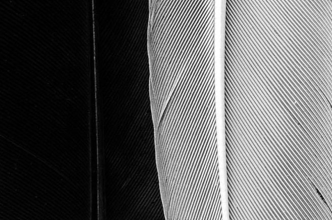 Black And White Feather Photography White Feather Black Amp White