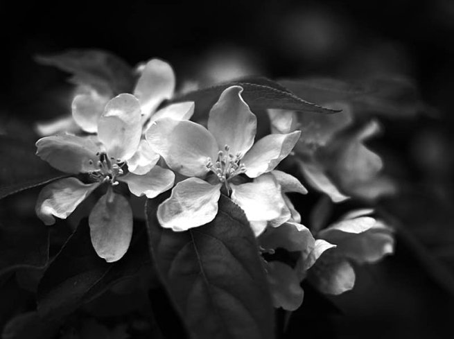 Tags bw flower photography 02